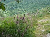 Suivez Léon sur les Landes du Beaujolais avec les Guides de pays du Beaujolais !