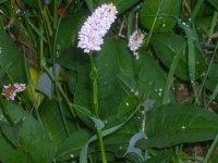 Balade sur caillebotis, découverte de la zone humide des Monneries