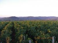 Balade des crus du Beaujolais à la terrasse de Chiroubles