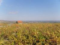 Balade oeonolgique des crus du Beaujolais