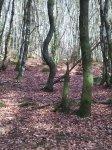 Balade nature dans le Beaujolais vert, hêtraie de la Roche d'Ajoux