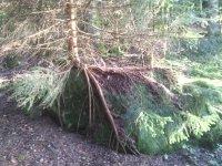 Balade nature des arbres du Beaujolais dans le massif de la Roche d'Ajoux