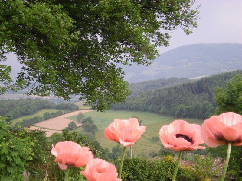 Balade avec un guide de pays dans le Haut Beaujolais !