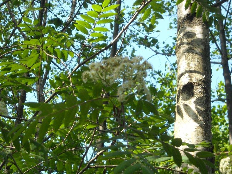 Visite avec un guide pays de la zone humide des Monneries, Poule-les Echarmeaux