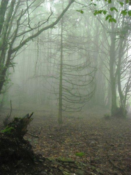 Boisement du Beaujolais dans le massif de la Roche d'Ajoux, diversifiacation en mélèses,