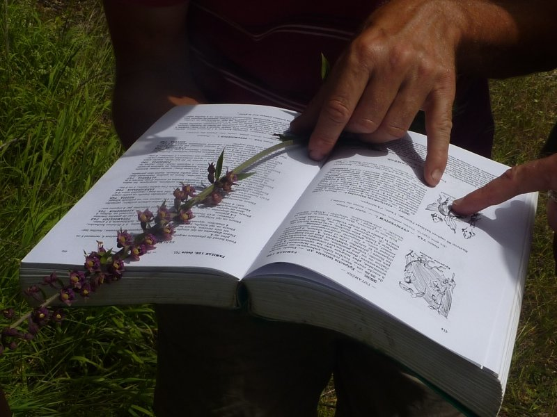 Balade botanique avec Marie-Claire Buffière, guide de pays Beaujolais