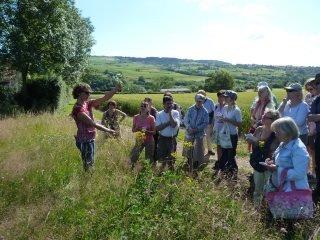 Balade botanique et salades sauvages, avace un guide de pays Beaujolais