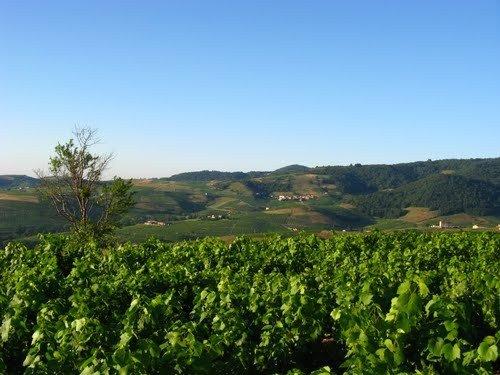 Balade des 10 crus du Beaujolais, vue panoramique